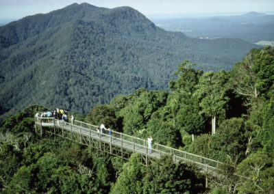 Dorrigo Skywalk