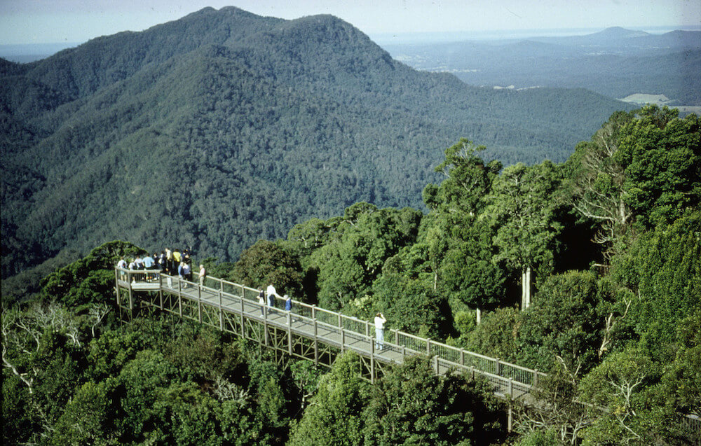 Photo looking to the Dorrigo Skywalk with mountains in the background