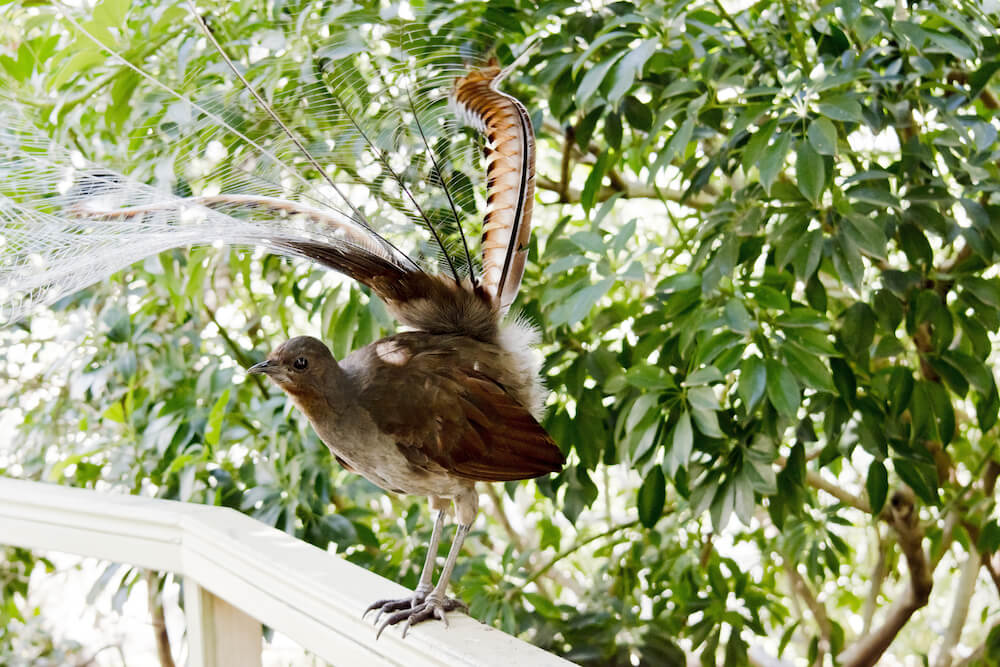 LOOKOUT MOUNTAIN RETREAT BIRDWATCHING